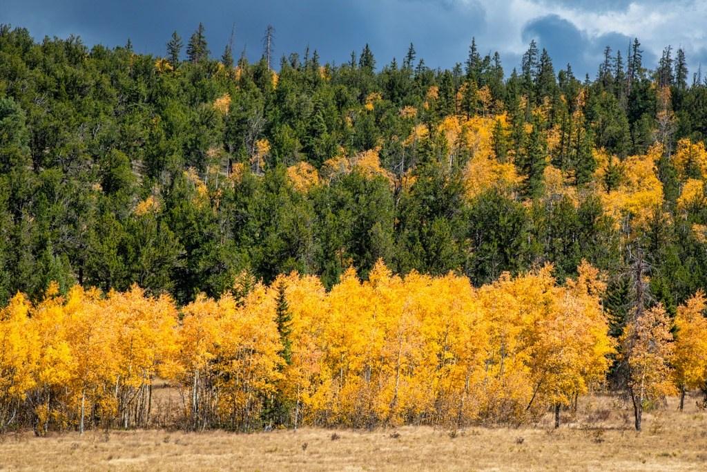 Aspen Row - Colorado autumn photography