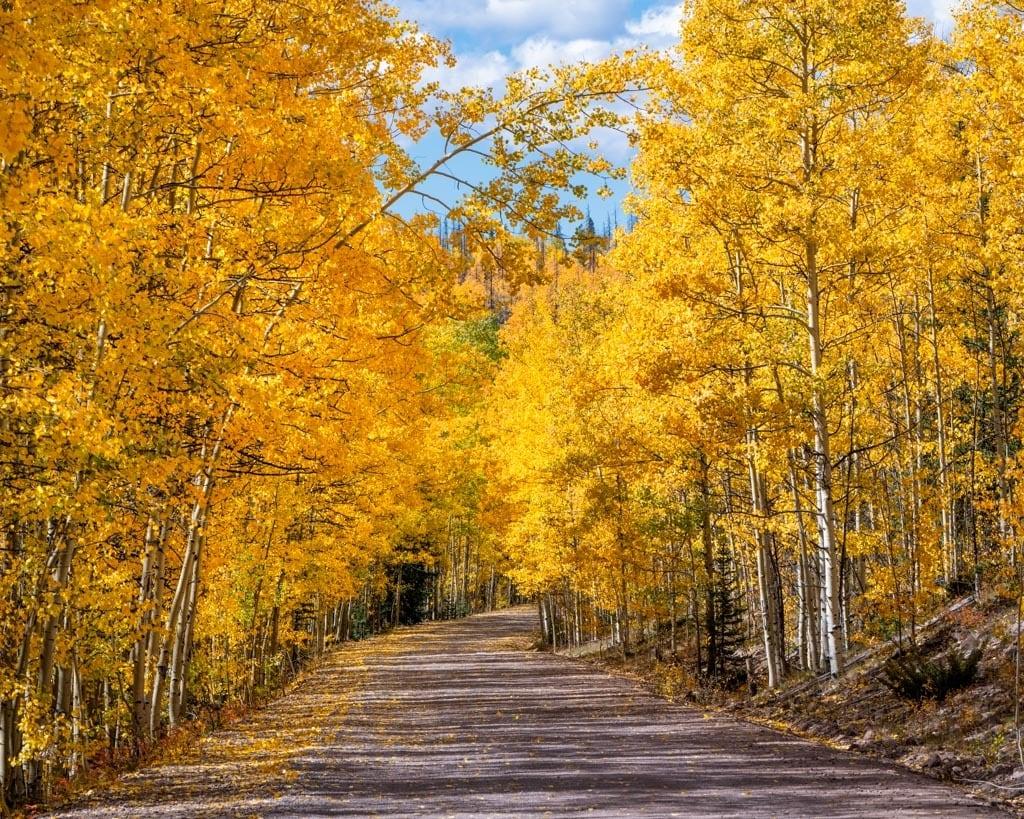 Aspen Drive - Colorado autumn colors