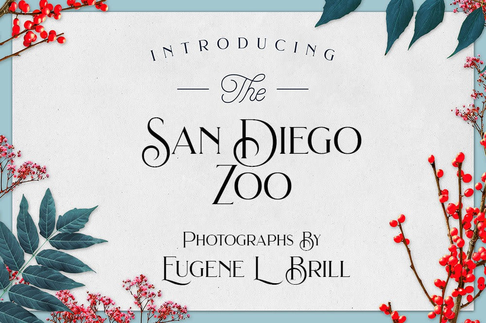San Diego Zoo Photos by Eugene Brill
