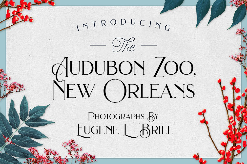 Audubon Zoo New Orleans Photos by Eugene Brill