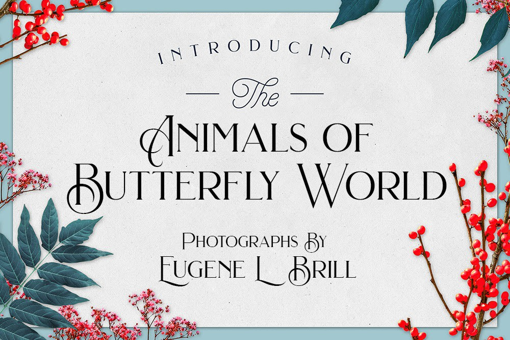 Animals of Butterfly World by Eugene Brill