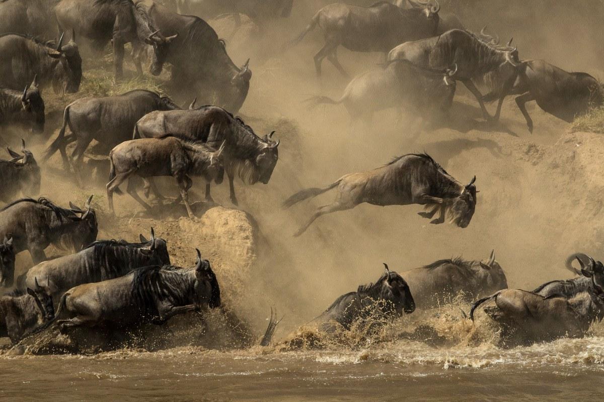 The Mara River Leap