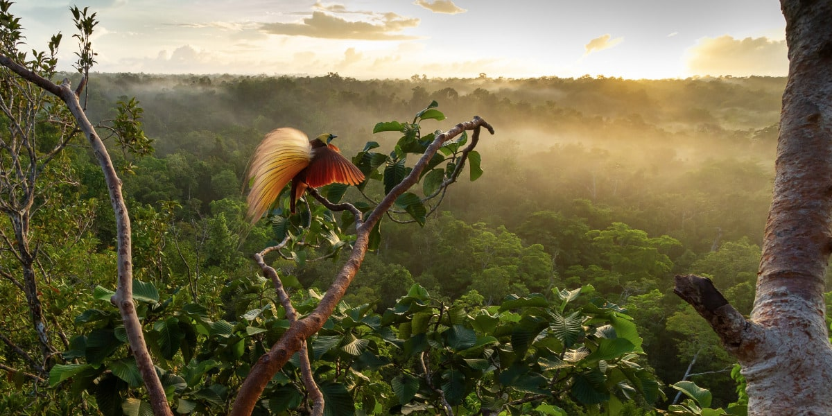 Bird-of-Paradise Sunrise