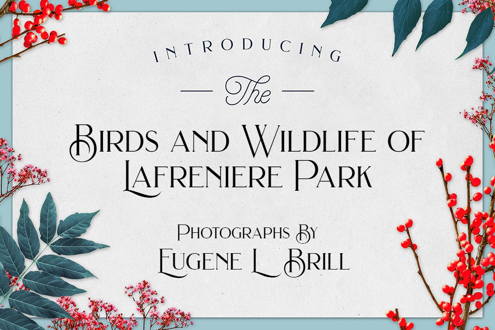 Lafreniere Park Photography by Eugene Brill