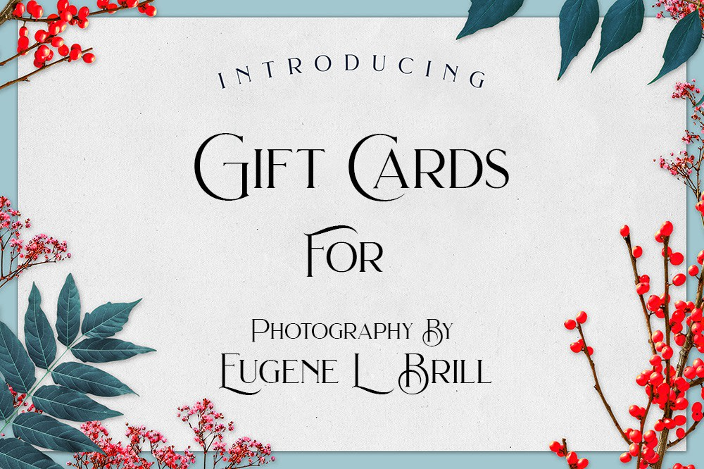 Gift Cards by Eugene Brill