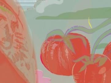 Tomato Lessons