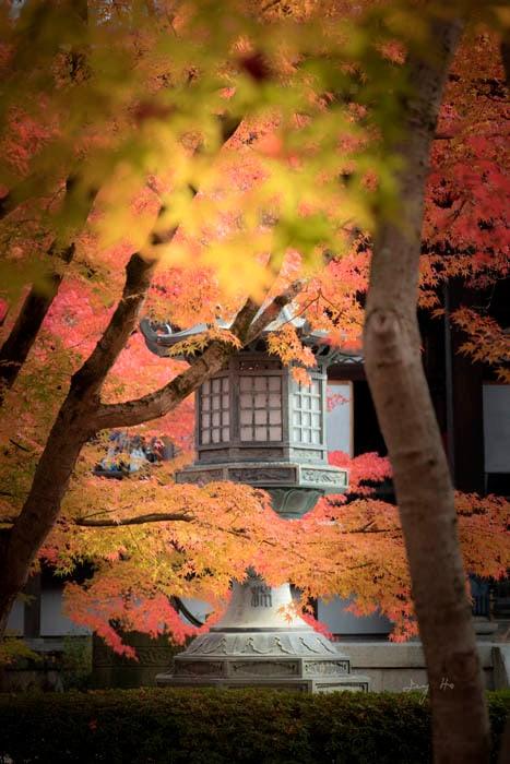 The Zen of Autumn