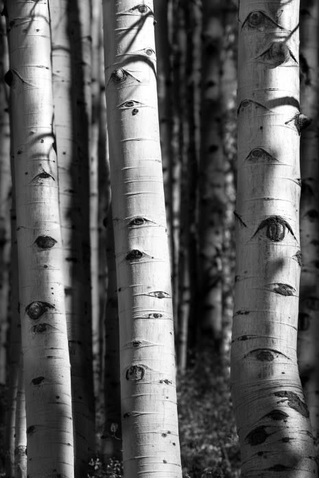 The Aspen are Watching