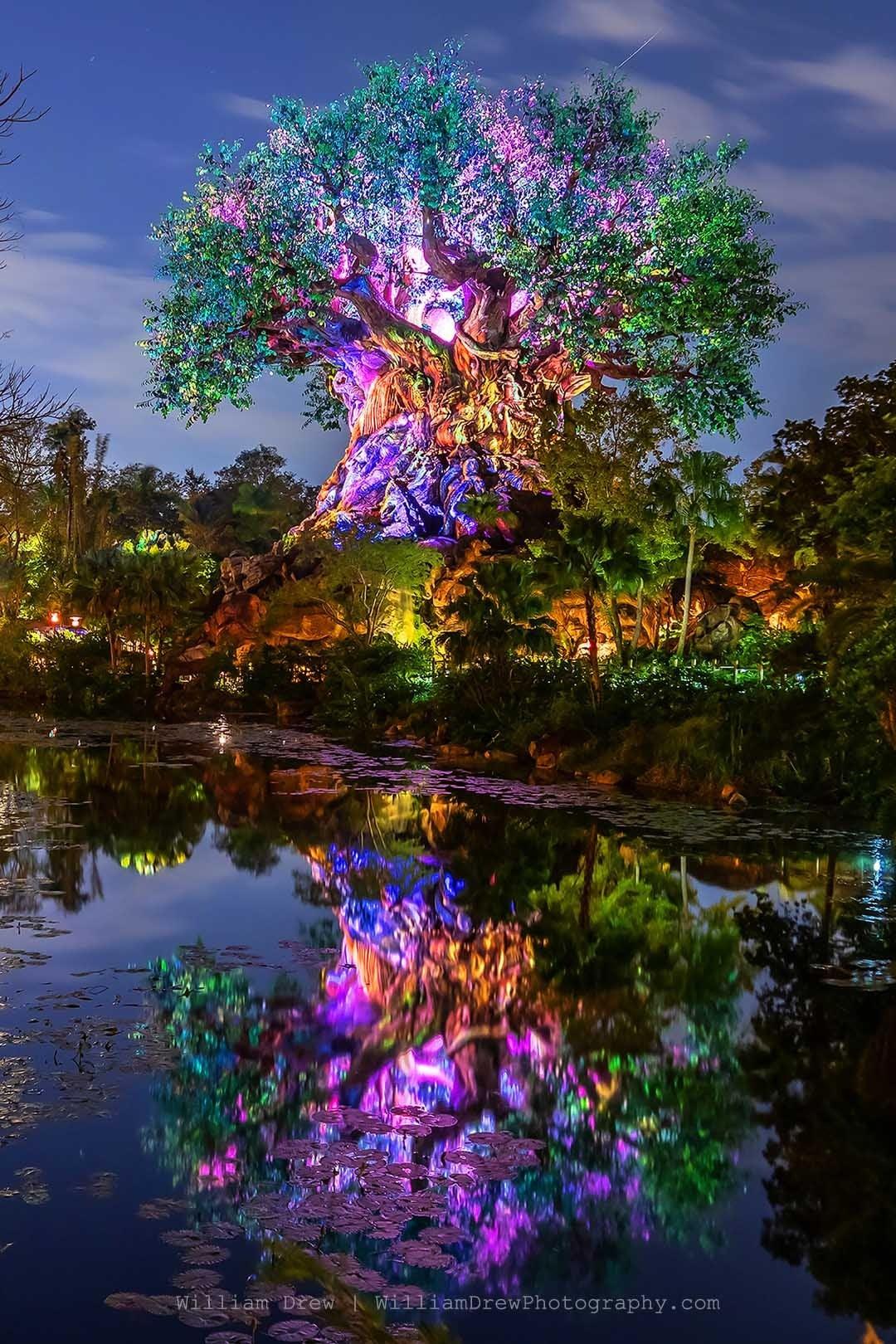 Disney's Tree of Life Reflections 2 - Disney Fine Art Photography Galleries | William Drew Photography