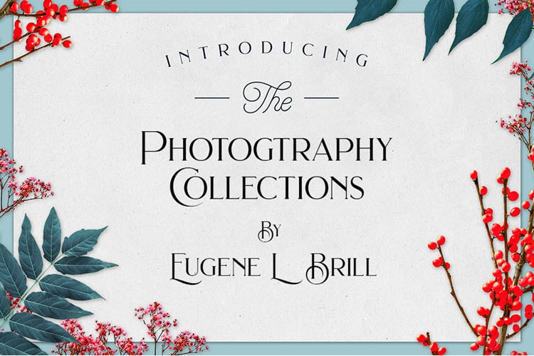Eugene Brill Collections