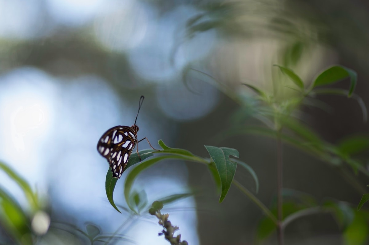 Small Butterfly on Leaf