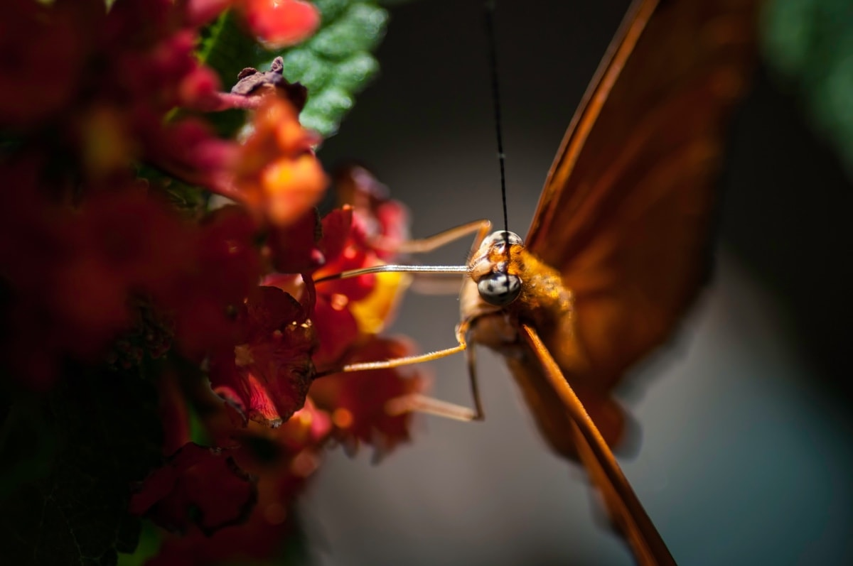 New Jersey Butterfly 3