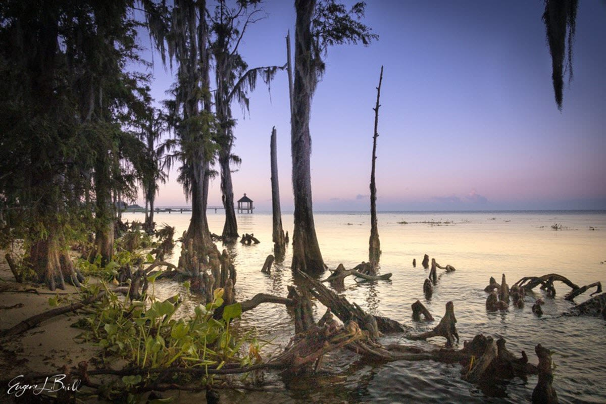 Fontainebleau State Park by Eugene Brill