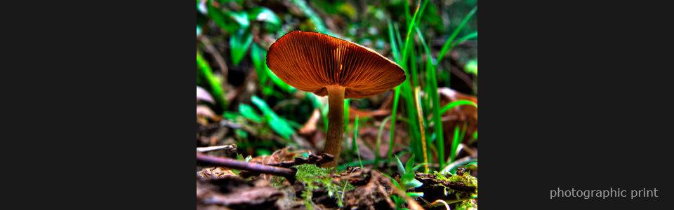 Mushroom  text fqiqjl