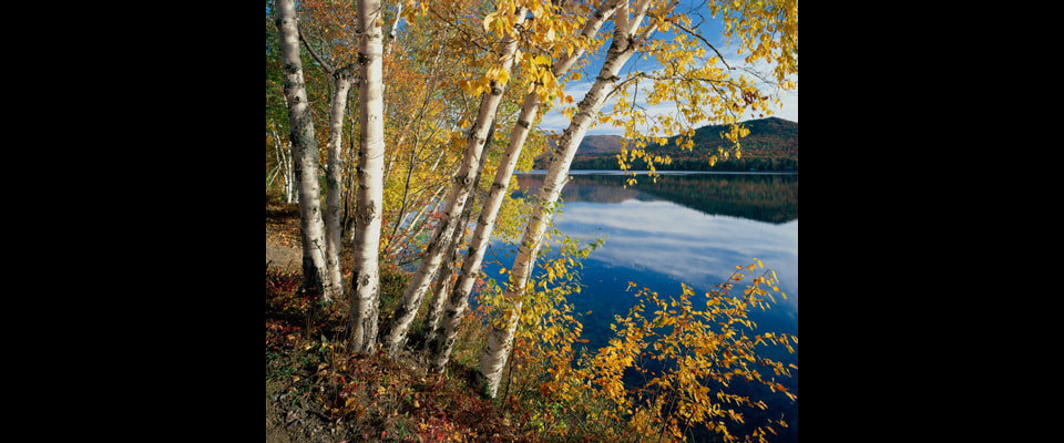 Birch_tree_lake_24x20_hlxsea