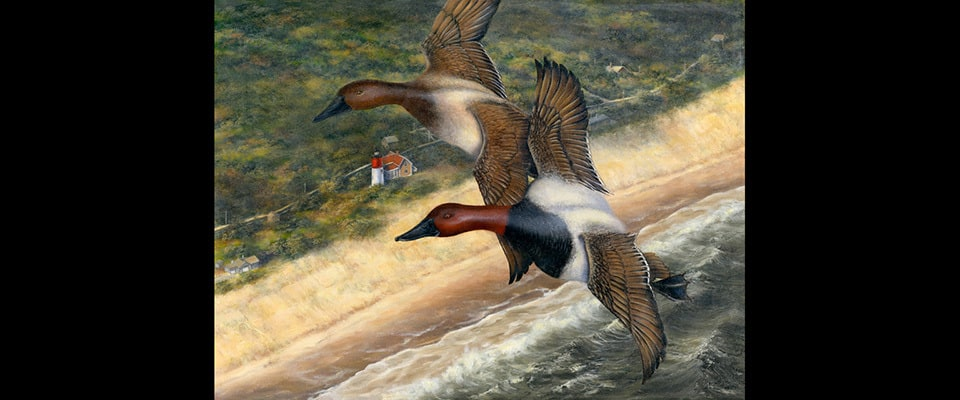 Duck stamp 18 x 24 final kipwoy