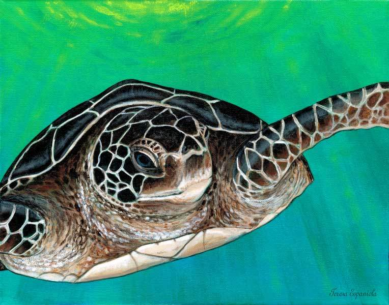 Turtle talk  web 30 600px ezd9zd