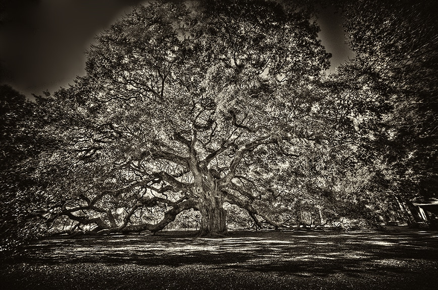 Angel oak sepia canvas copy pdbteu