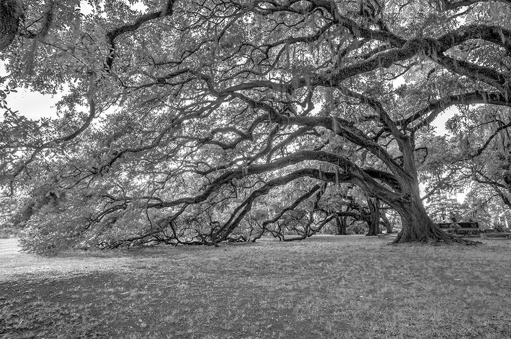 Bw oaks dteadi d0qtlp
