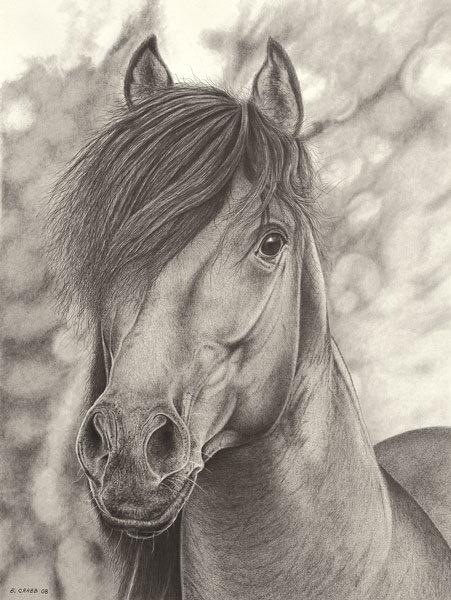 Horse portrait yhdcat