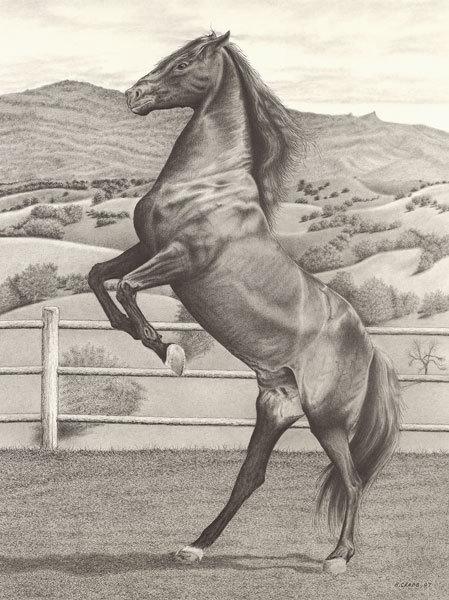 Horse rearing l2z6cf