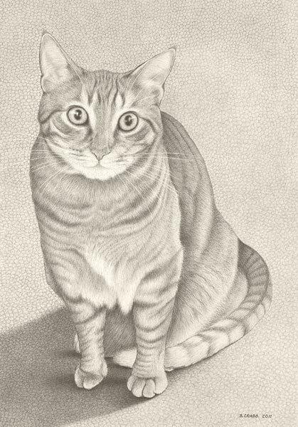 Tabby cat lomwml