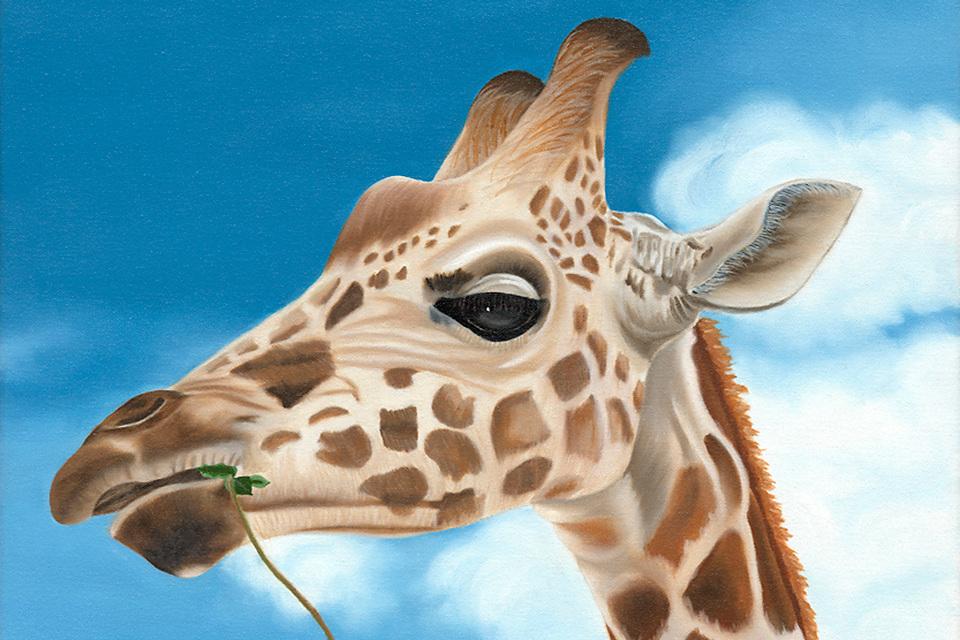 Terrisdavis giraffe 960x640 ealdya