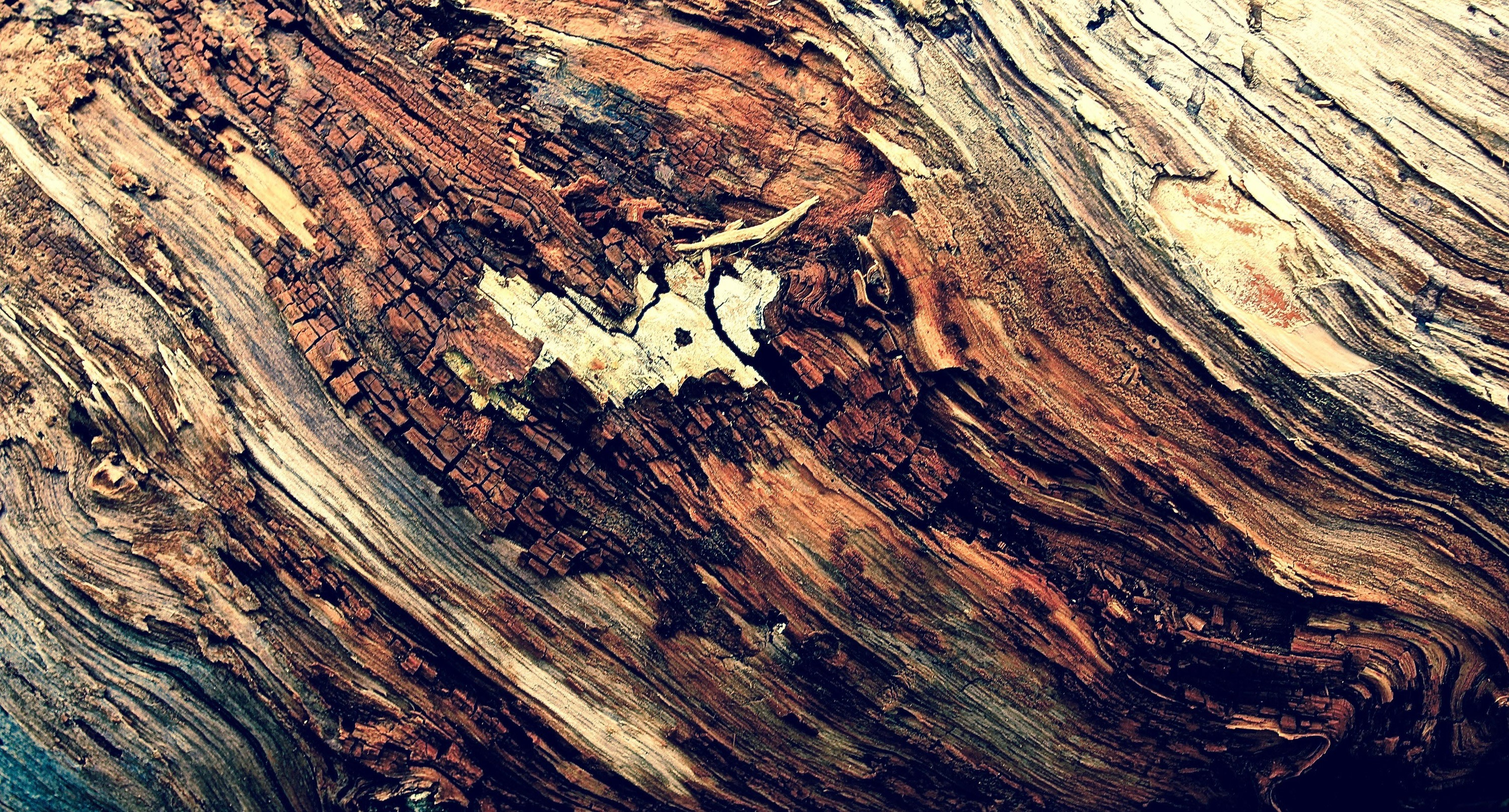 <div class='title'>           Stumped         </div>                 <div class='description'>           Details on texture and color of a stump along the Bryce Canyon Rim Trail. May, 2015.         </div>