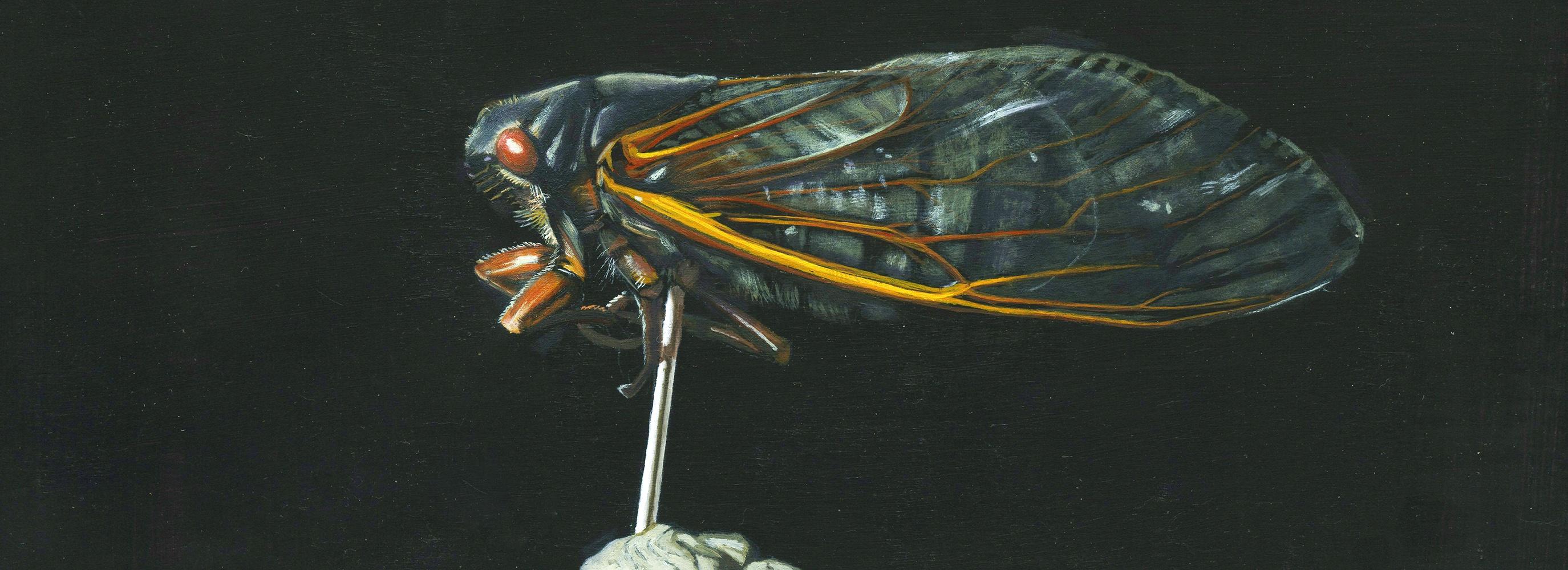 <div class='title'>           Cicada-small-frmnr4         </div>