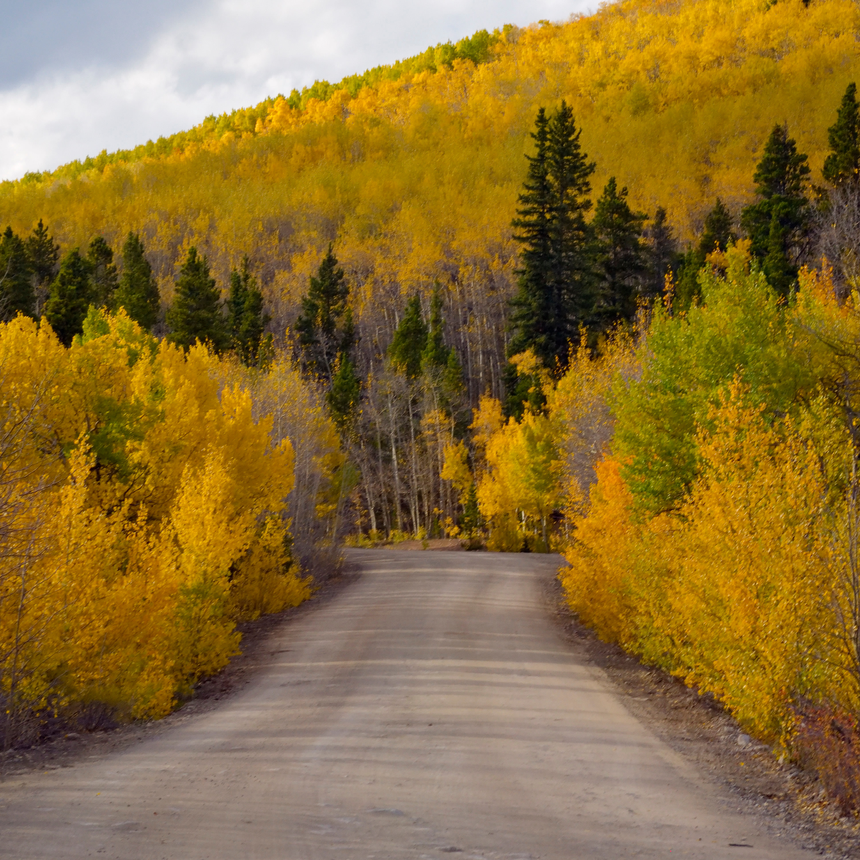 <div class='title'>           Aspens on Boreas Pass Road         </div>                 <div class='description'>           Aspen trees in fall color surround Boreas Pass Road in the Pike National Forest         </div>