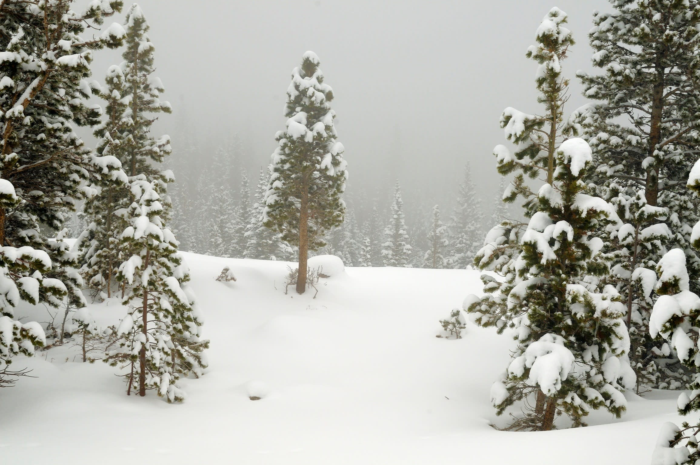 <div class='title'>           Winter in the Forest         </div>                 <div class='description'>           Low clouds hang in the pine forest like a fog as a blizzard is winding down in Rocky Mountain National Park.         </div>