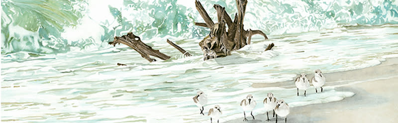 <div class='title'>           Driftwood in the Sur Sliderf         </div>