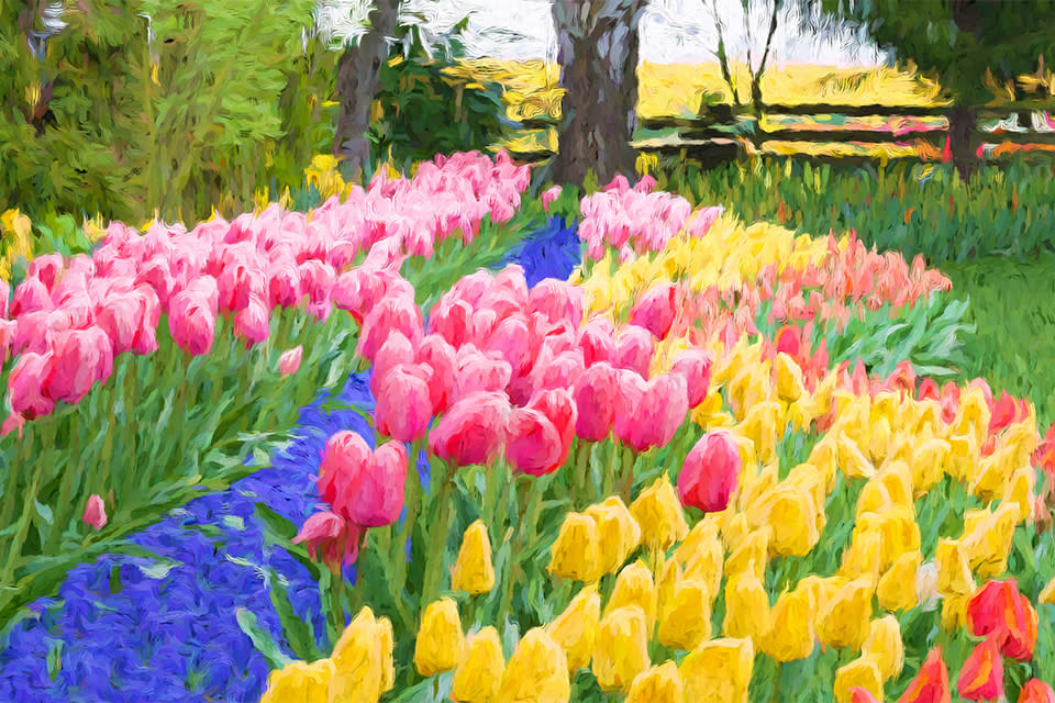 Plwalker_a_color_run_of_tulips_billboard_image_size_r7nxob
