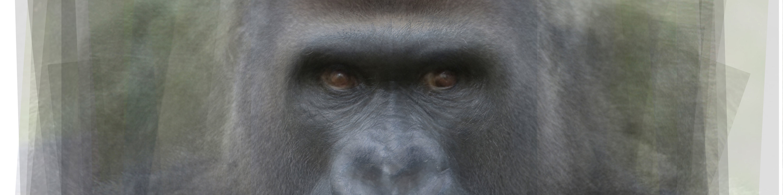 <div class='title'>           gorilla banner         </div>