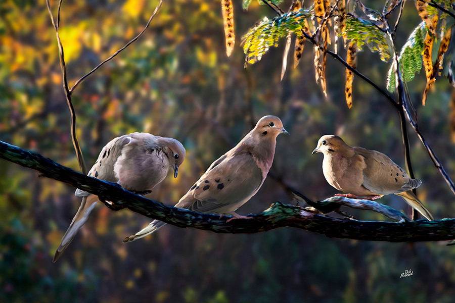 Birds_on_branch_np7ne6