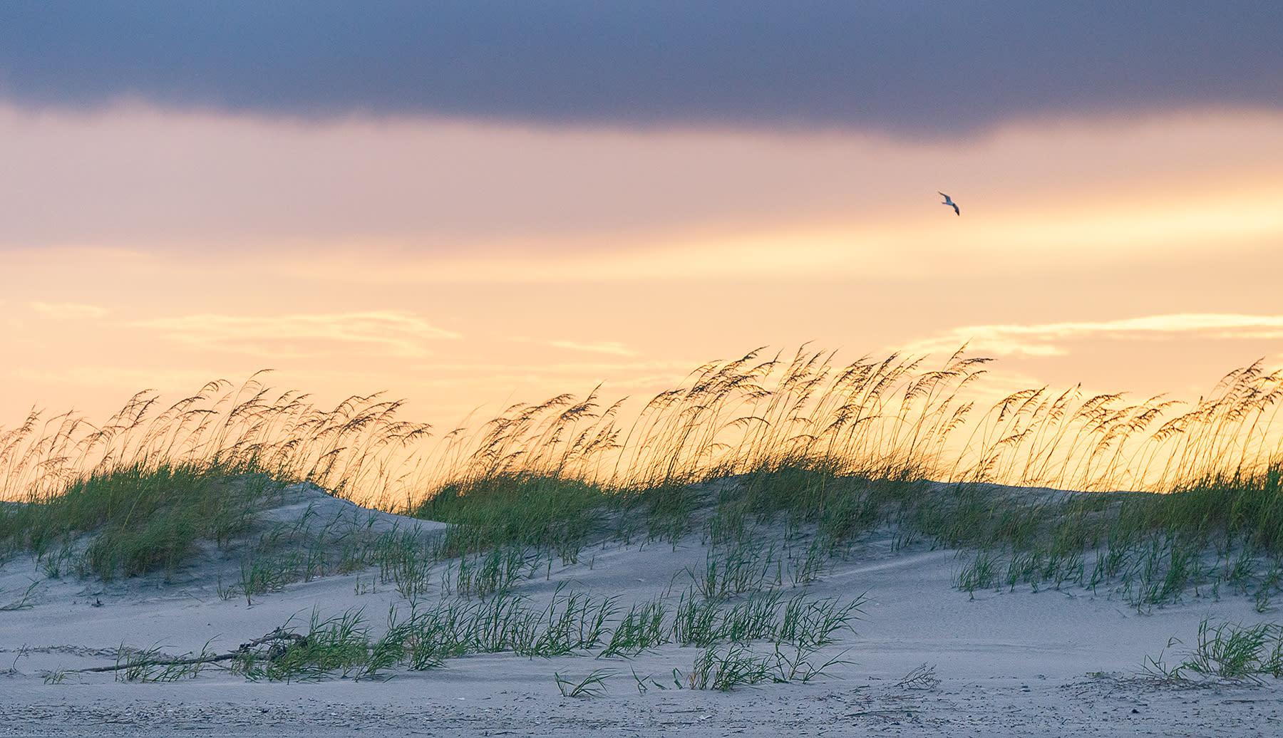 <div class='title'>           Folly Sunset Sand dunes and bird         </div>
