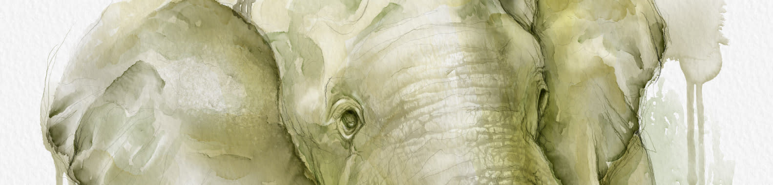 <div class='title'>           slider elephant         </div>