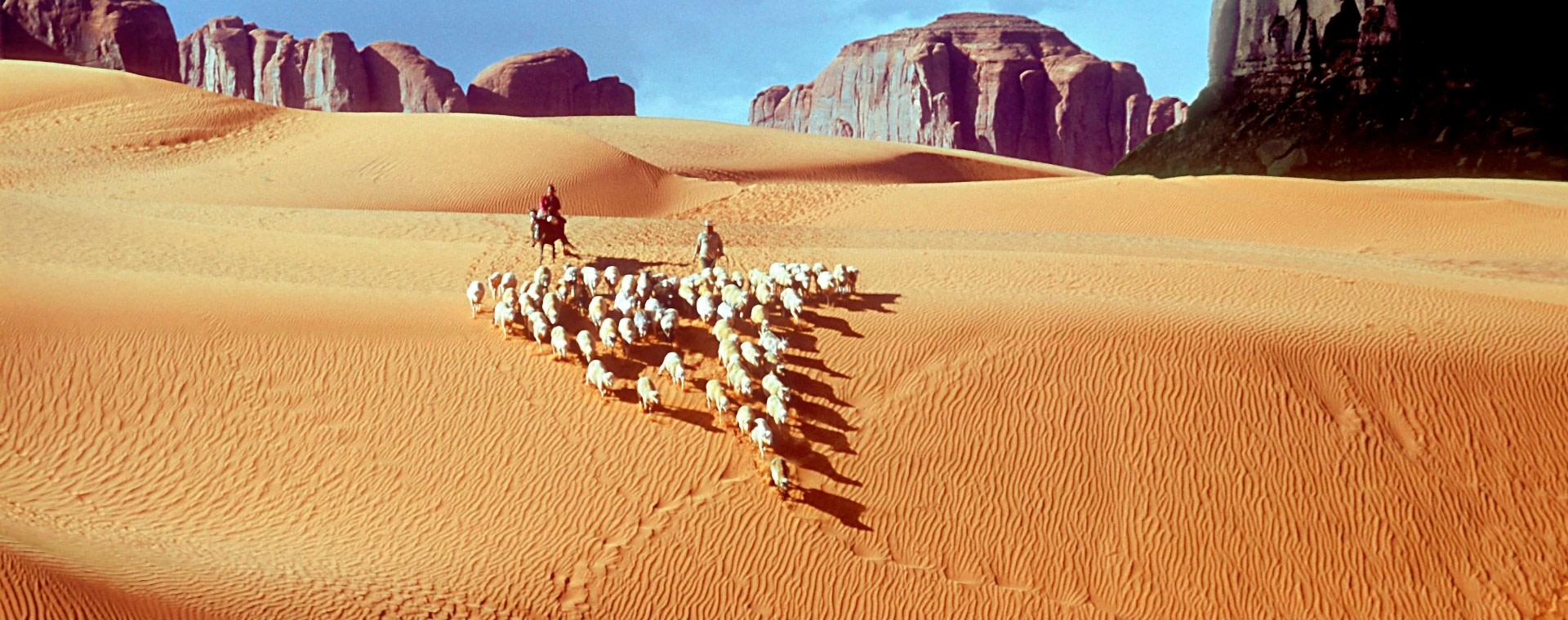 <div class='title'>           UCB #010 Driving Sheep         </div>