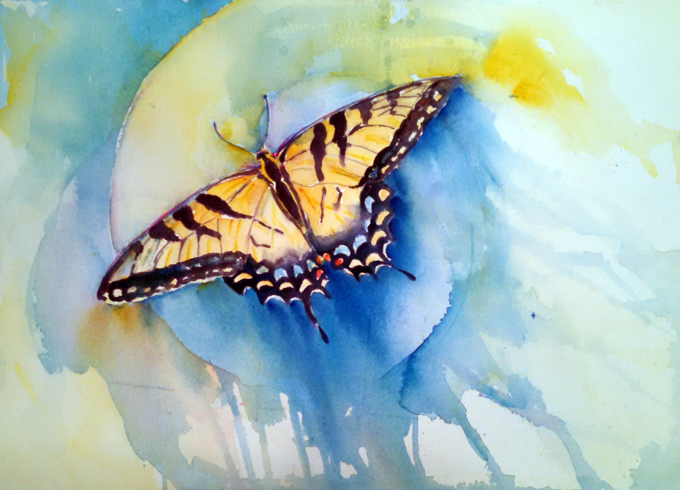 <div class='title'>           Tiger Swallowtail         </div>