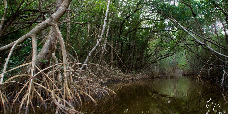 <div class='title'>                    </div>                 <div class='description'>           Photograph inside a mangrove creek         </div>