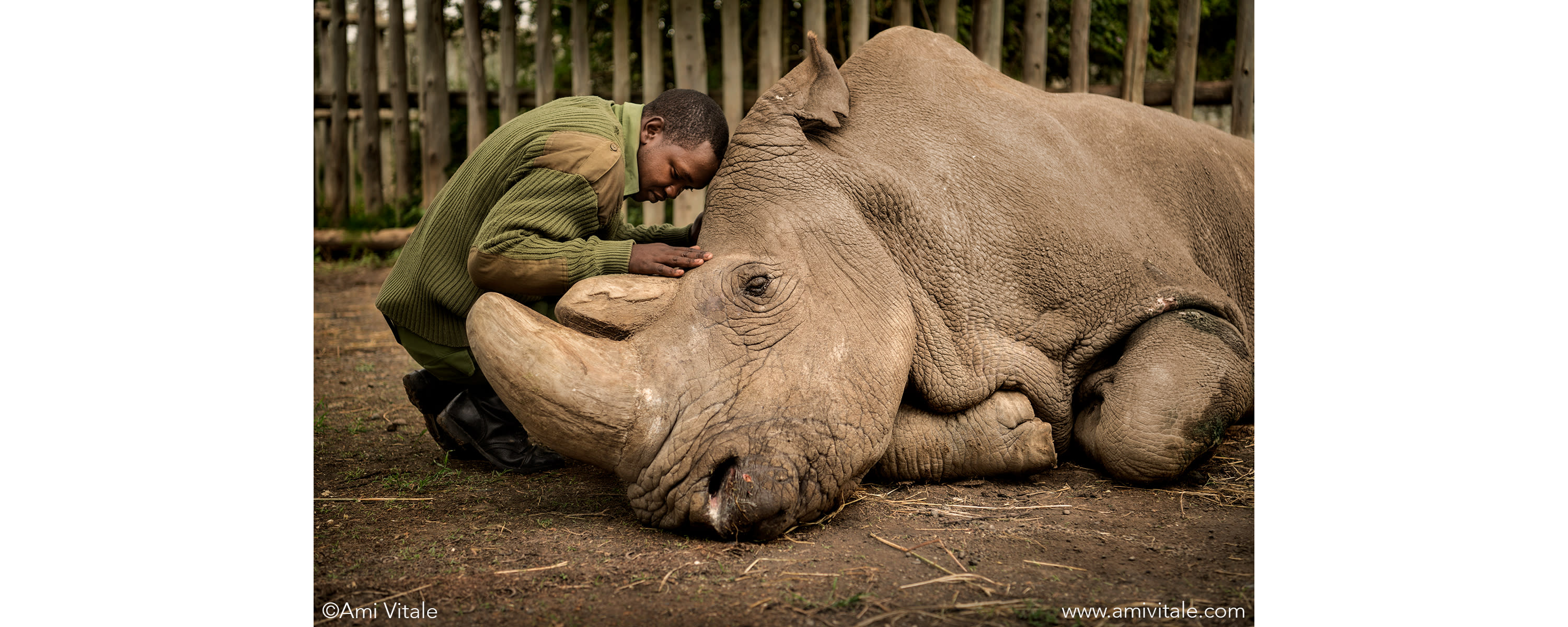 <div class='title'>           Portrait of Rhino Sudan and his caregiver by National Geographic photogarpher, Ami Vitale         </div>                 <div class='description'>                    </div>