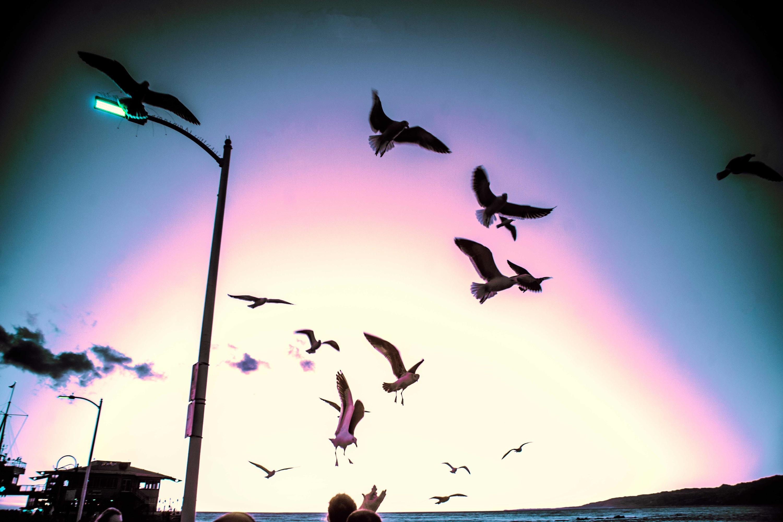 <div class='title'>           seagulls1 copy         </div>