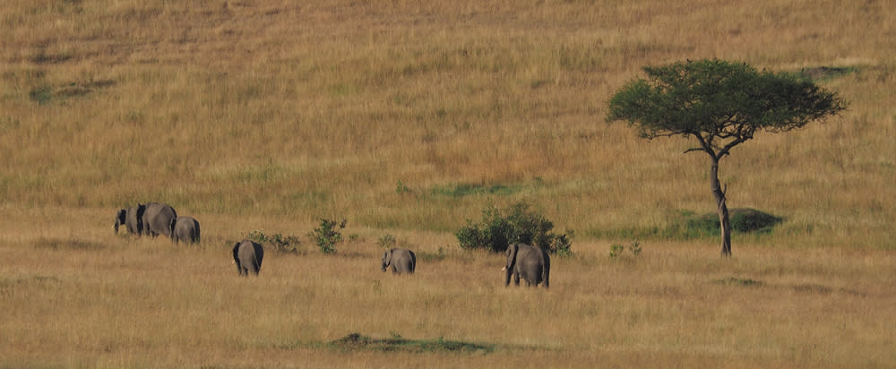 <div class='title'>           Masai Mara Elephants         </div>