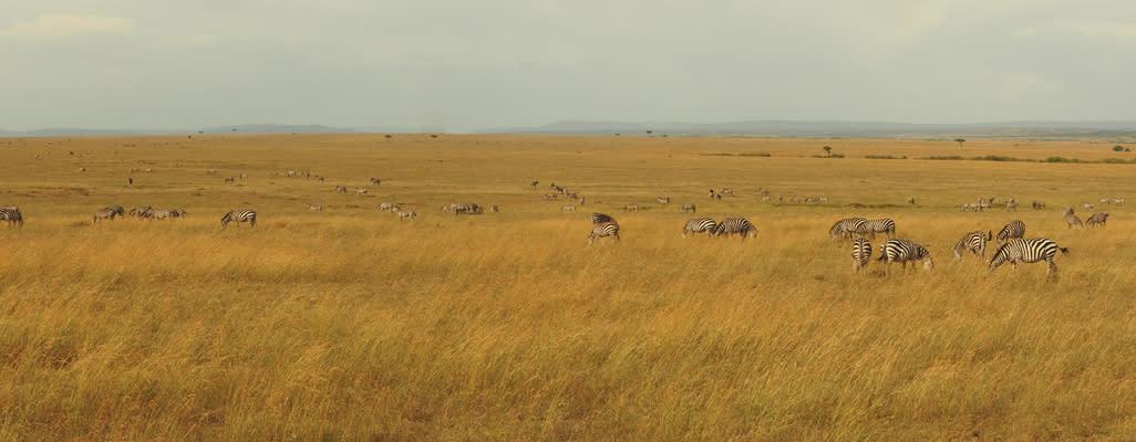 <div class='title'>           Masai Mara         </div>