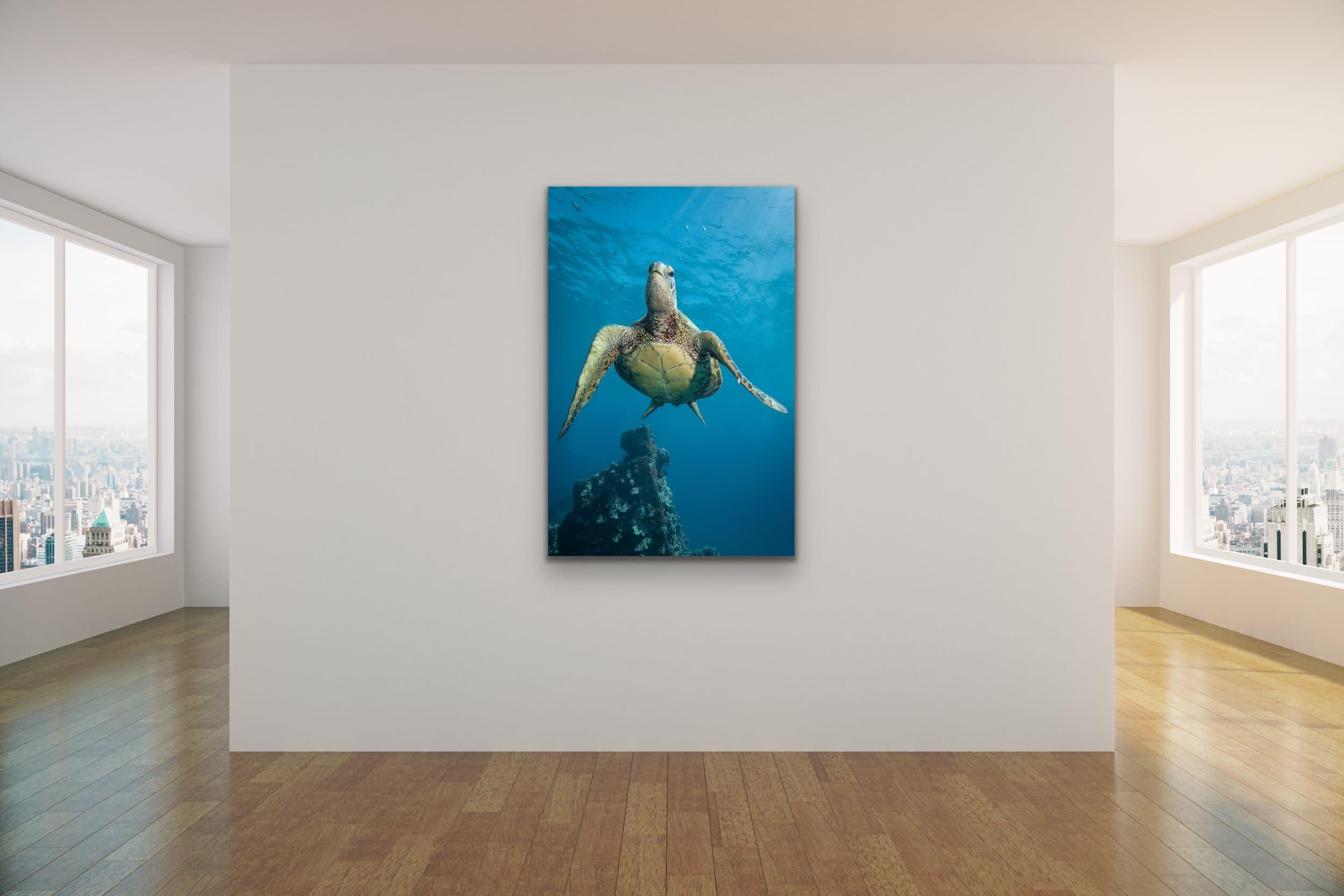<div class='title'>           Drew Sulock at Evo Art Maui Mock Up19         </div>