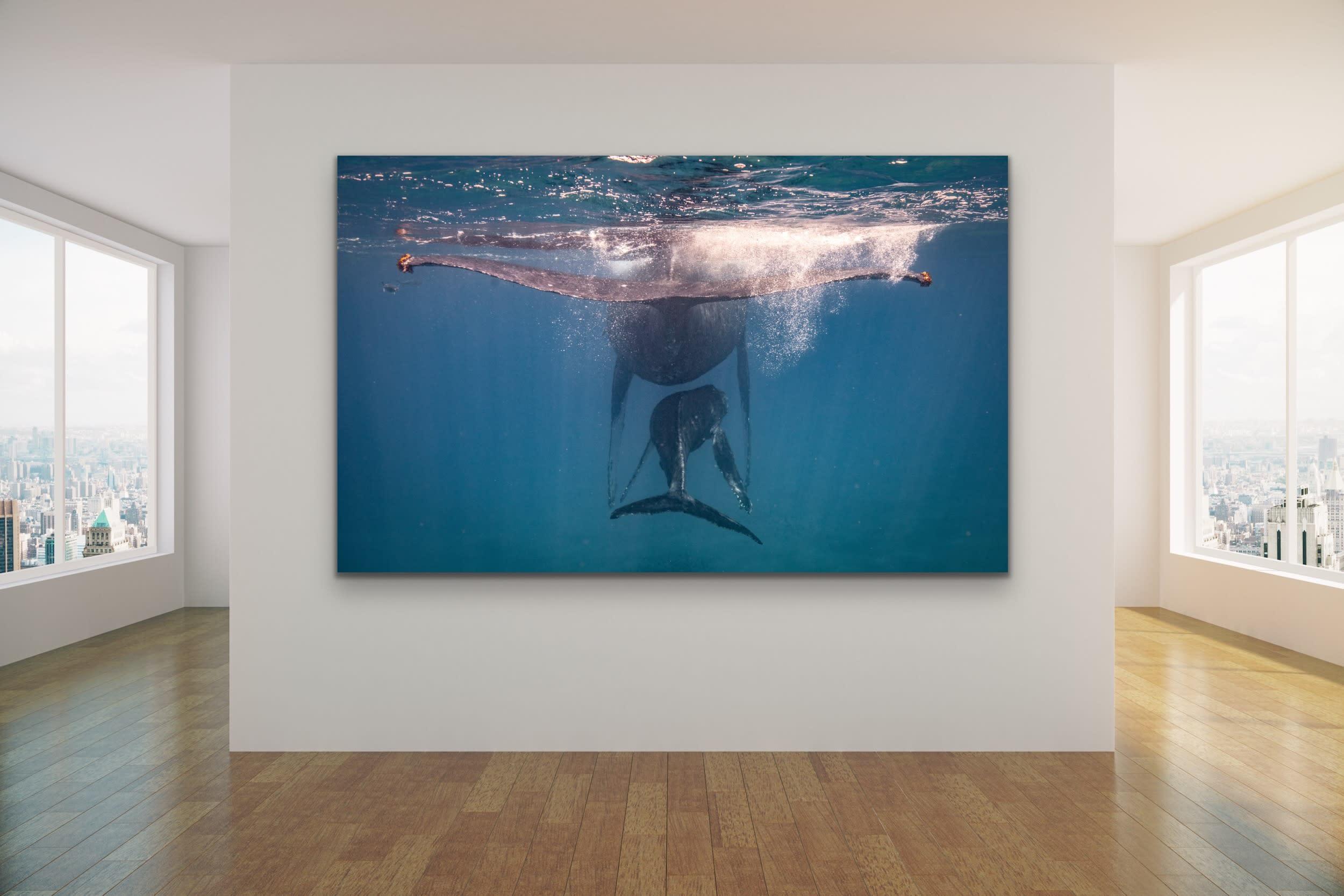 <div class='title'>           Drew Sulock at Evo Art Maui Mock Up16         </div>