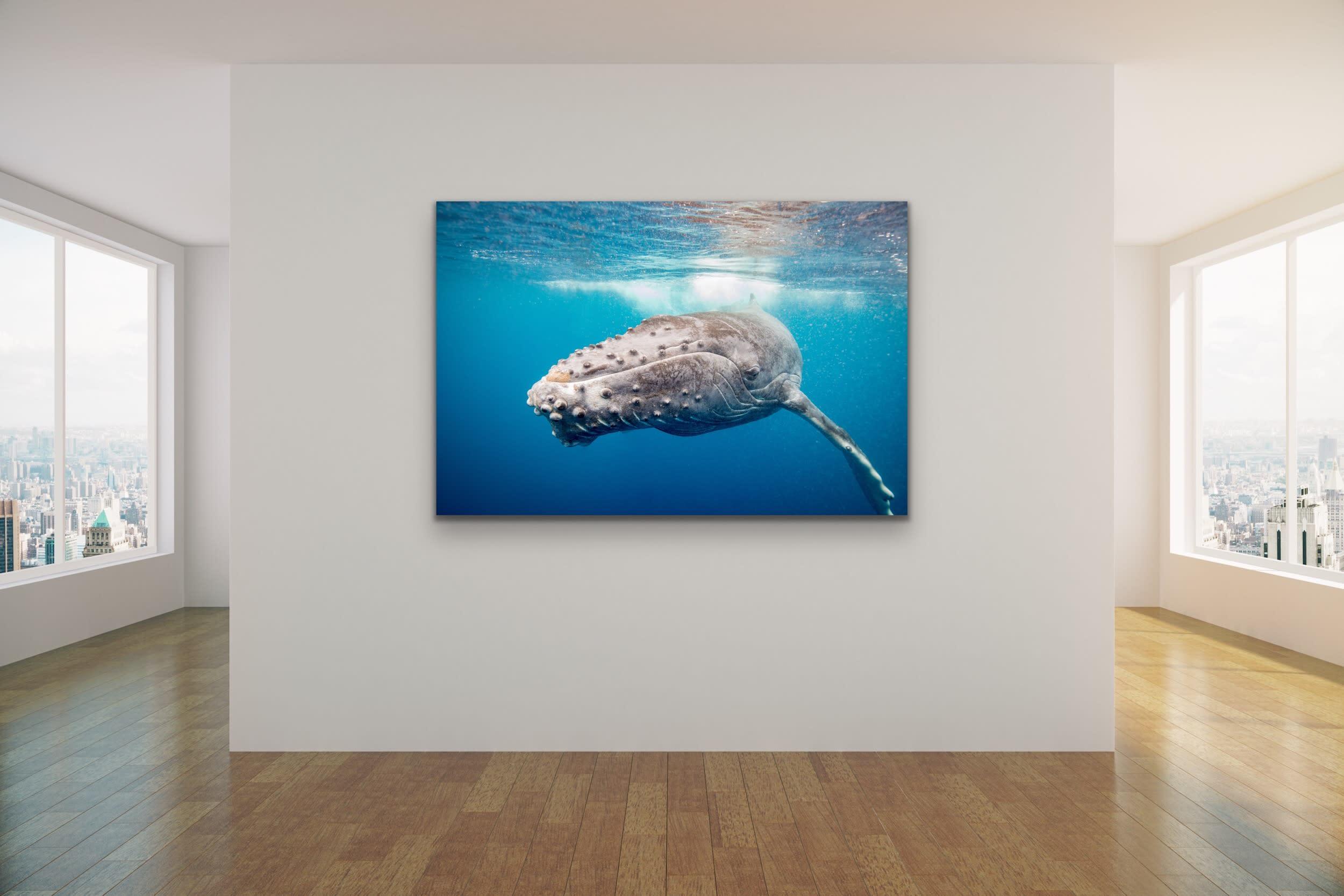 <div class='title'>           Drew Sulock at Evo Art Maui Mock Up30         </div>