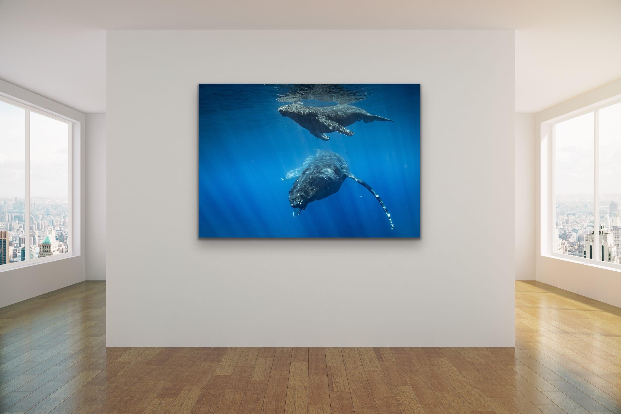 <div class='title'>           Drew Sulock at Evo Art Maui Mock Up31         </div>