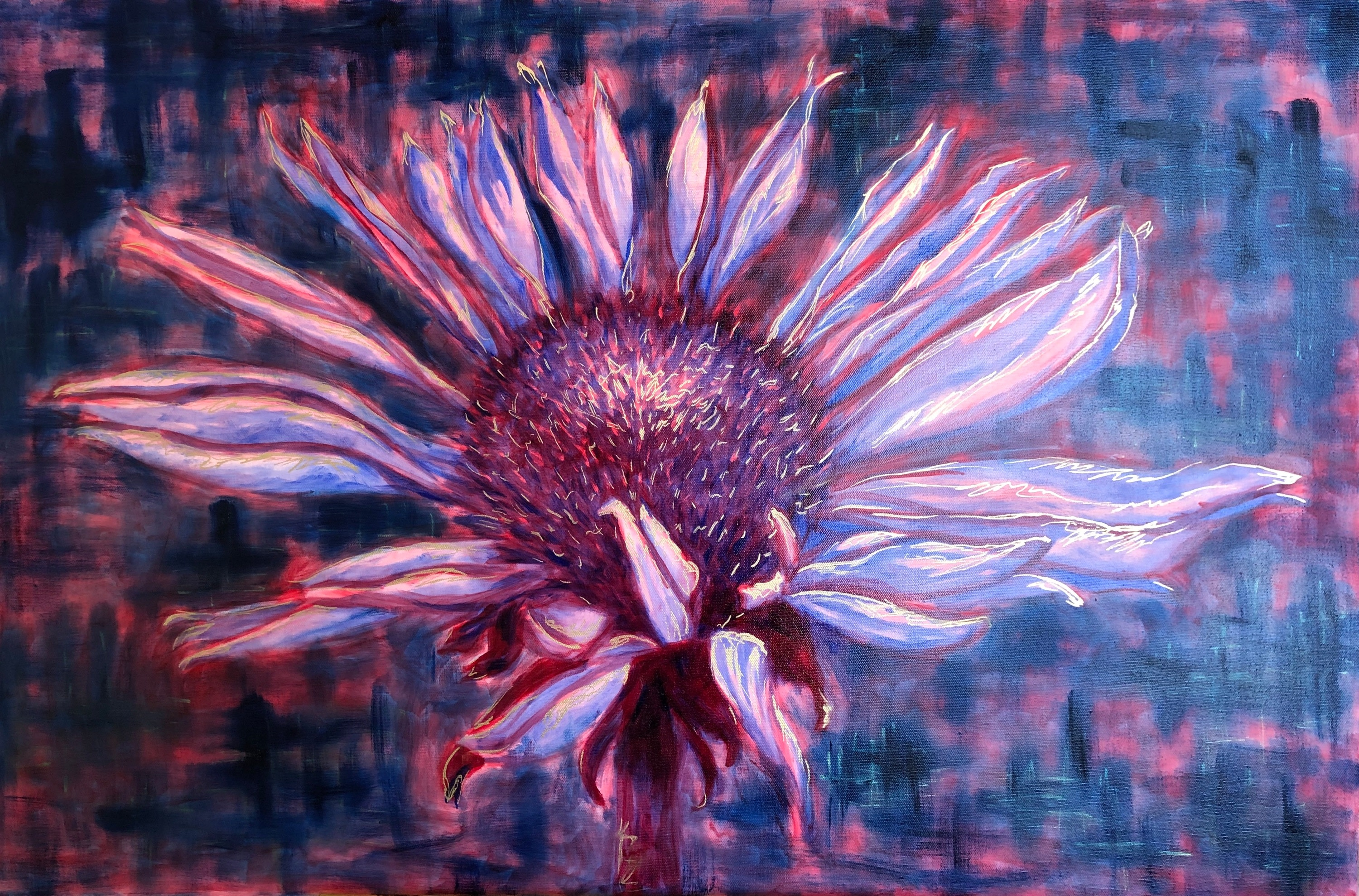 <div class='title'>           Cone Flower   36x24 (oil on canvas)         </div>