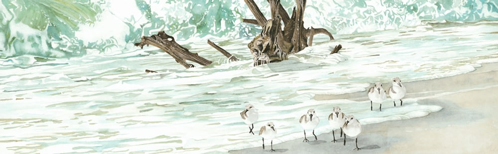 <div class='title'>           Driftwood in the Surf          </div>                 <div class='description'>           Sandpipers playing in the surf in the shadow of driftwoodof on a tropical beach          </div>